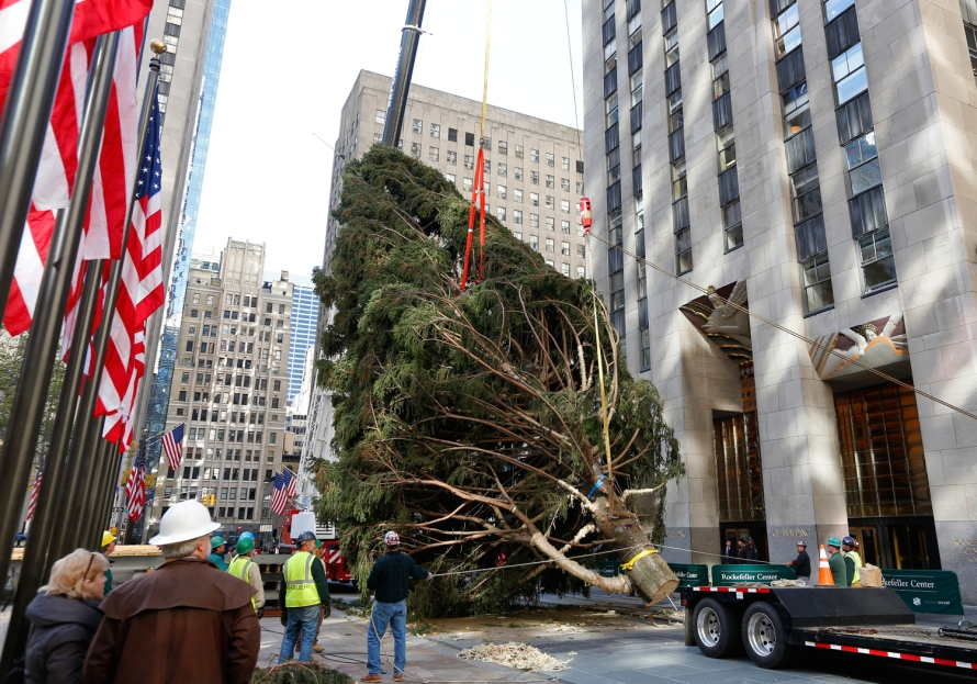 The tree is hauled through the streets (Photo Courtesy of NBC News)